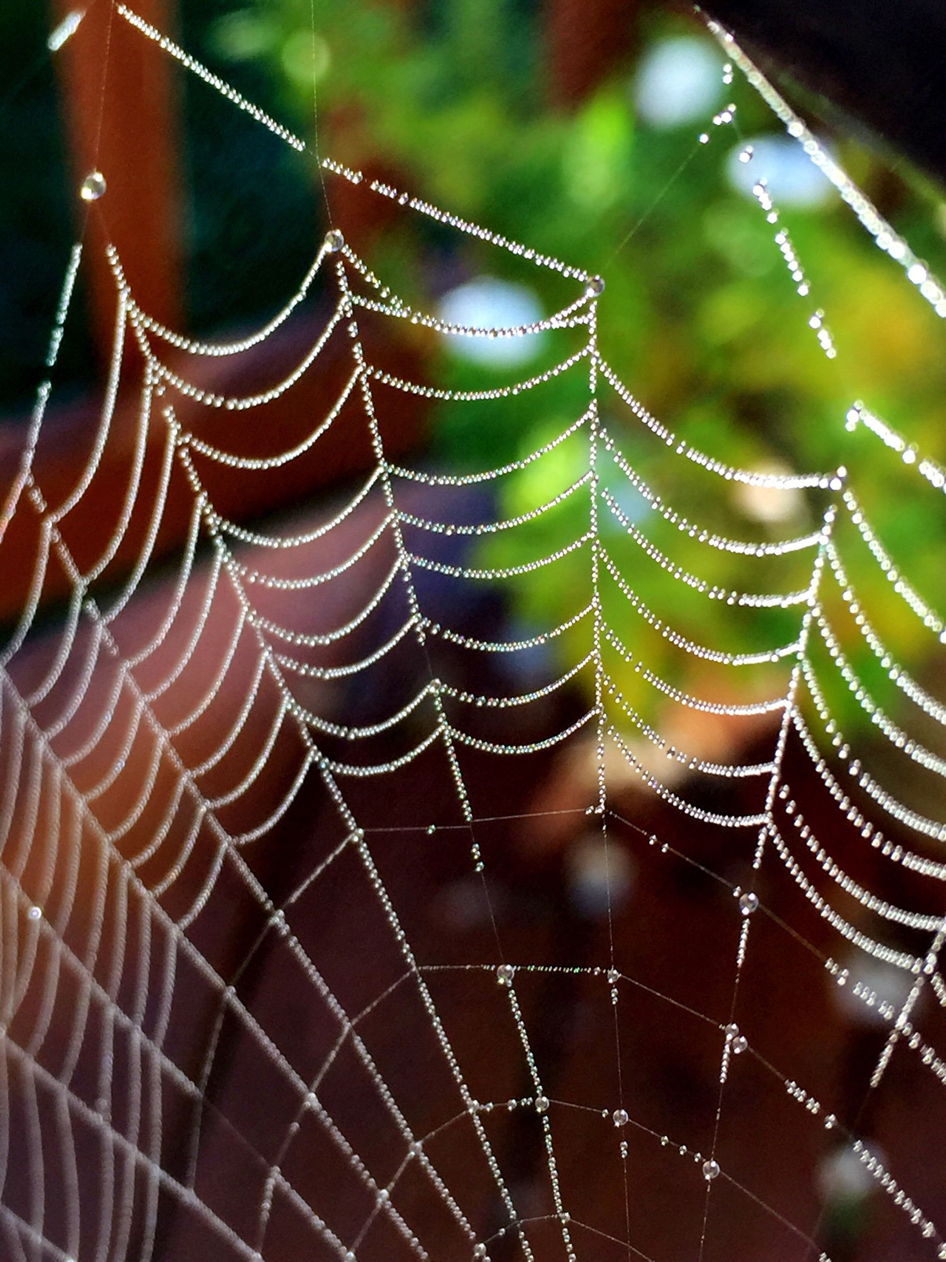 close-up, spider web, drop, natural pattern, fragility, wet, water, focus on foreground, nature, detail, dew, beauty in nature, complexity, growth, green color, plant, freshness, day, repetition, animal markings, outdoors, intricacy, full frame, tranquility