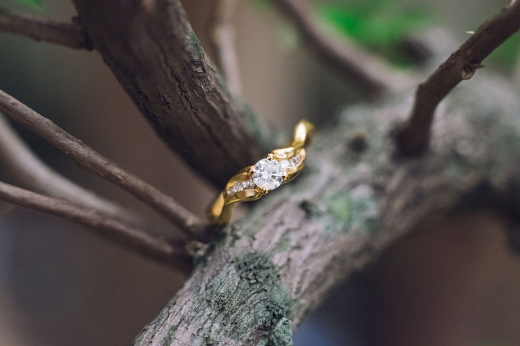 Wedding Ring Animal Themes Branch Close-up Day Focus On Foreground Nature No People Outdoors Ring Tree We Weather