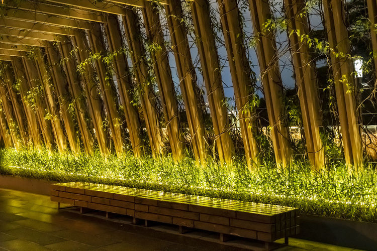 Low angle view of illuminated plants at night