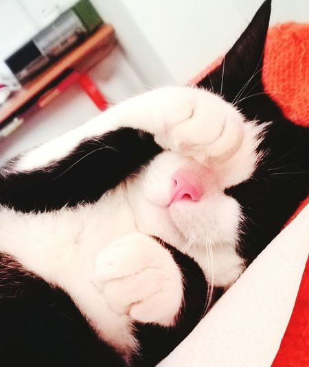 Photo Of The Day Photooftheday Photography No People Nature Sleeping Cats Cat Lovers Catoftheday Sweet Kitty Blackandwhite Leavemealone Cuddles Animal Animal Photography Pink Nose White Boots Home