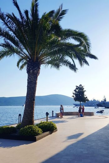 Porto Porto Montenegro Tivat Fotography Posing Blue Sky Sky And Sea Family Vacations Yacht Yachting Fotograf Tree Water Palm Tree Sea Beach Sand Sky Horizon Over Water Coconut Palm Tree