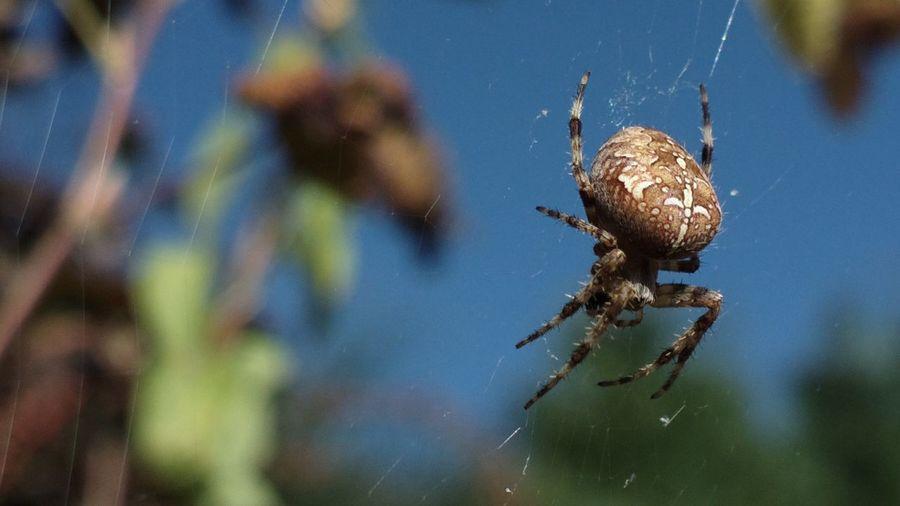 Spider One