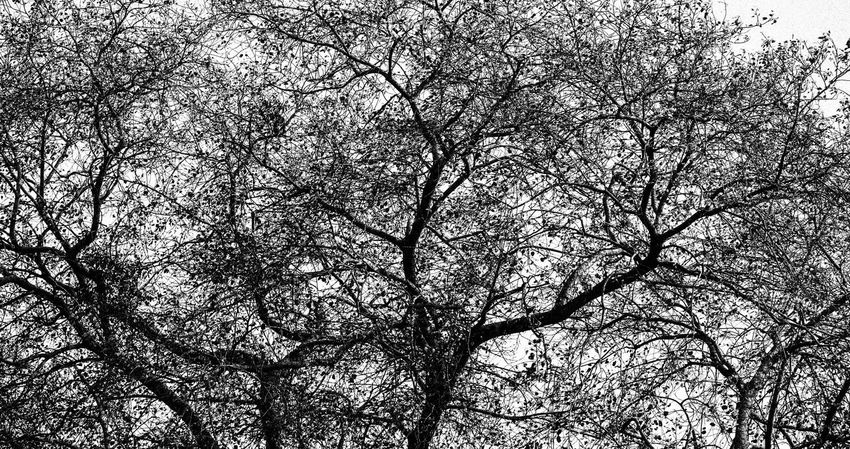 texture Backgrounds Beauty In Nature Black Beauty Blackandwhite Branch Close-up Day Full Frame Growth Horizontal Low Angle View Nature No People Outdoors Sky Texture Tree Tree