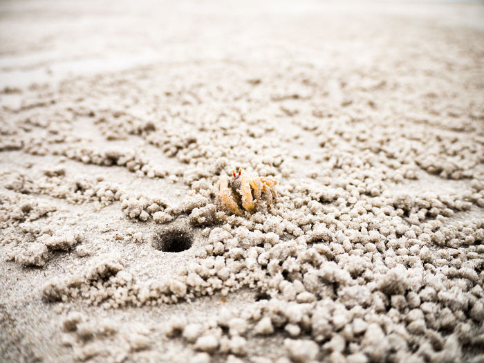 Close-up of hermit crab on sand