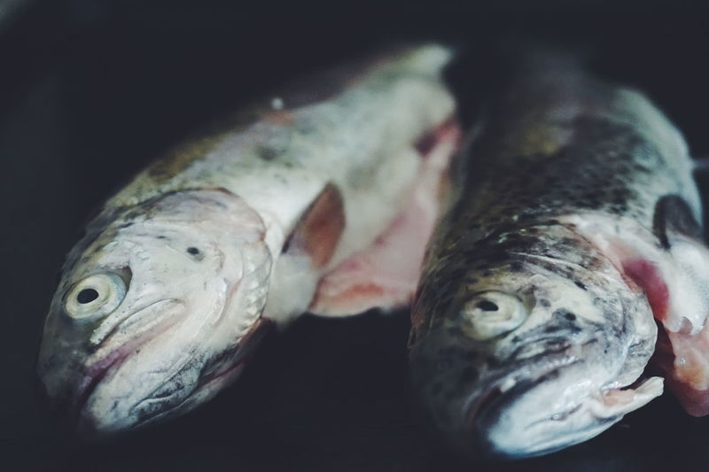 Close up Photo of Fresh fish Animal Themes Close Up Close-up Cooking Cooking At Home Fish Fisheye Food Fresh Fish Freshness Healthy Eating Indoors  Ingred Ingredient Night No People