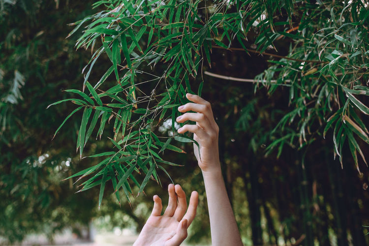 Midsection of woman holding plant against trees