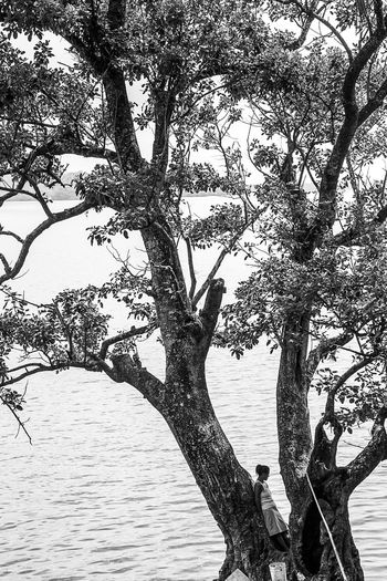 Mujer mirando al mar en la isla de Rama Cay Bare Tree Beauty In Nature Branch Day Growing Growth Idyllic Nature No People Non-urban Scene Outdoors Remote Rippled Scenics Sky Tranquil Scene Tranquility Tree Tree Trunk Water The Street Photographer - 2017 EyeEm Awards Lost In The Landscape