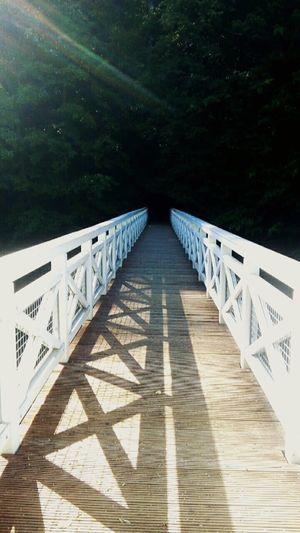 Bridge Mystic Düster Nature Natur Park Forest First Eyeem Photo