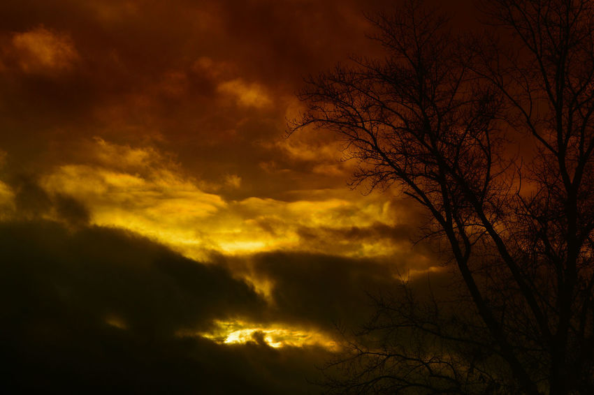 Sunset Beauty In Nature Nature Sky No People Dramatic Sky Scenics Cloud - Sky Dark Silhouette Tree Outdoors Storm Cloud Decline Tree And Sky Darkness And Light Heat - Temperature Red And Yellow Gold Sunshine Sunshine Light Through The Dark Clouds Twillight