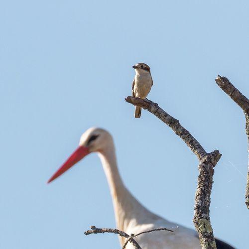 Bird Watching Little Bird and Stork Nest Nature Blue Sky