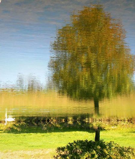 Nature's Illusion Art Nature Nature_collection Nature Photography Upside Down Illusion Not A Painting Nature's Art Pastel Colors Colors Green Color Green Yellow Blue Blue Sky Water Water Reflections Hill Bird Tree Water Reflection Animal Themes Sky Grass Pond Agricultural Field Standing Water Calm Countryside