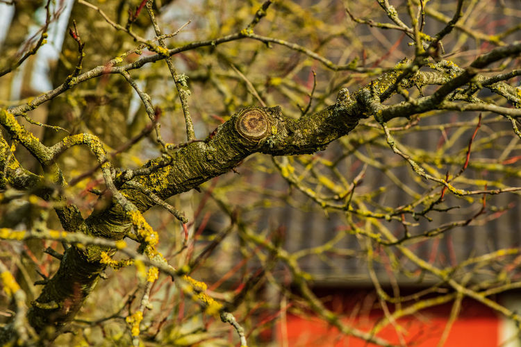 Green Color Outdoors Focus On Foreground Branch Tree Plant Close-up Germany Village Village Life House Branches Spring Springtime Curves Selective Focus