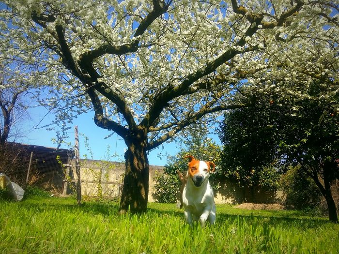 Low angle view of dog sitting on tree