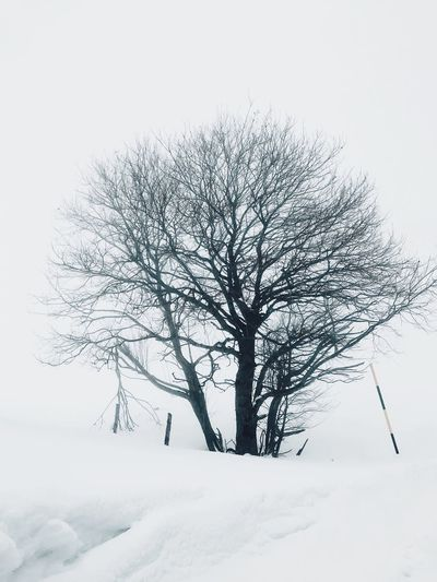 Tree Winter Snow Plant Cold Temperature Tranquility Beauty In Nature Branch Environment Bare Tree White Color