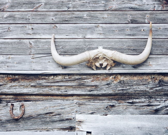 part of an old wooden house Wood Wood - Material Wooden Woods WoodLand Backgrounds Background Textures And Surfaces Textured  Texture Surfaces And Textures Country Life Country Living Bull Horns Horns Horn Rustic Style Rustic Home Is Where The Art Is Finding New Frontiers