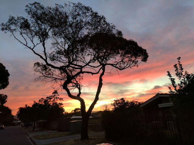 Sunset Tree Sky Silhouette Dramatic Sky Nature Cloud - Sky Beauty In Nature Sun No People Outdoors Day