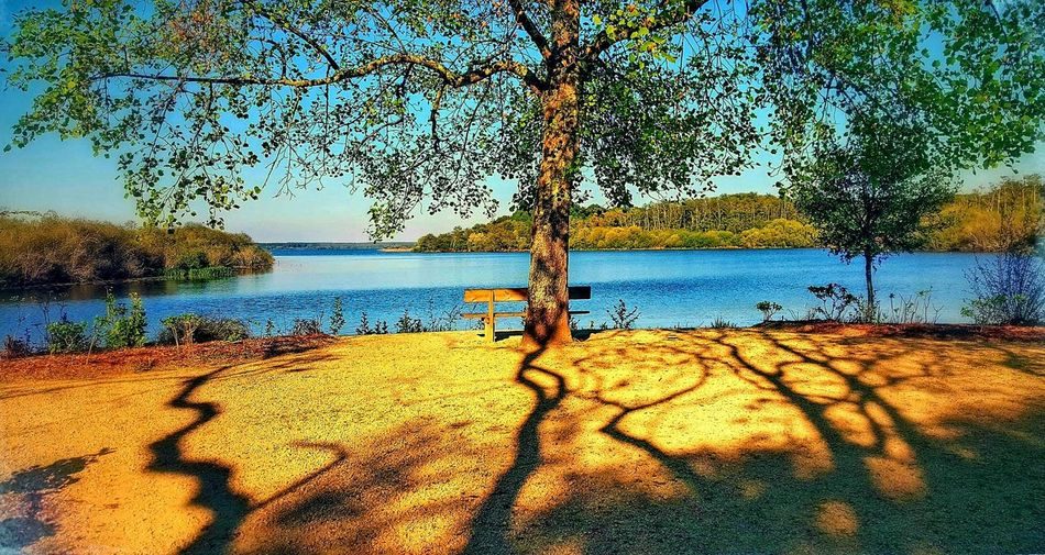 Water Nature Outdoors Day No People Beauty In Nature Sky Scenics Tranquil Scene Sand Sunlight Tree Tranquility Lagoon Lago Laguna Mimizan-Village, France