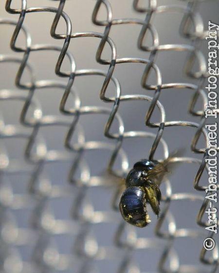 Fense Bumblebee