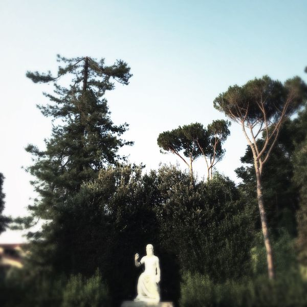 Toscana Italy Firenze Boboli Garden Trees