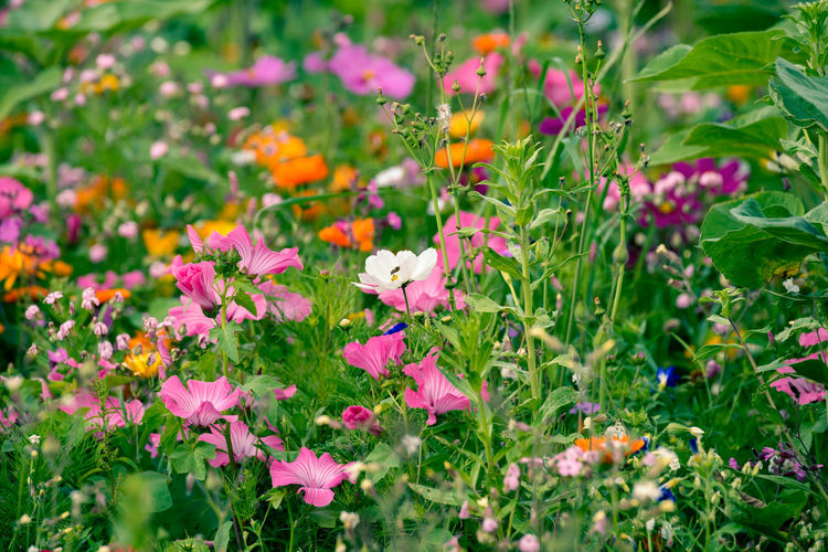Lovely blossoms of differnet kind of flowers in green wild grass Flowering Plant Flower Plant Fragility Beauty In Nature Vulnerability  Freshness Growth Petal Pink Color Green Color Nature No People Flower Head Selective Focus Day Close-up Inflorescence Field Land Outdoors Flowerbed