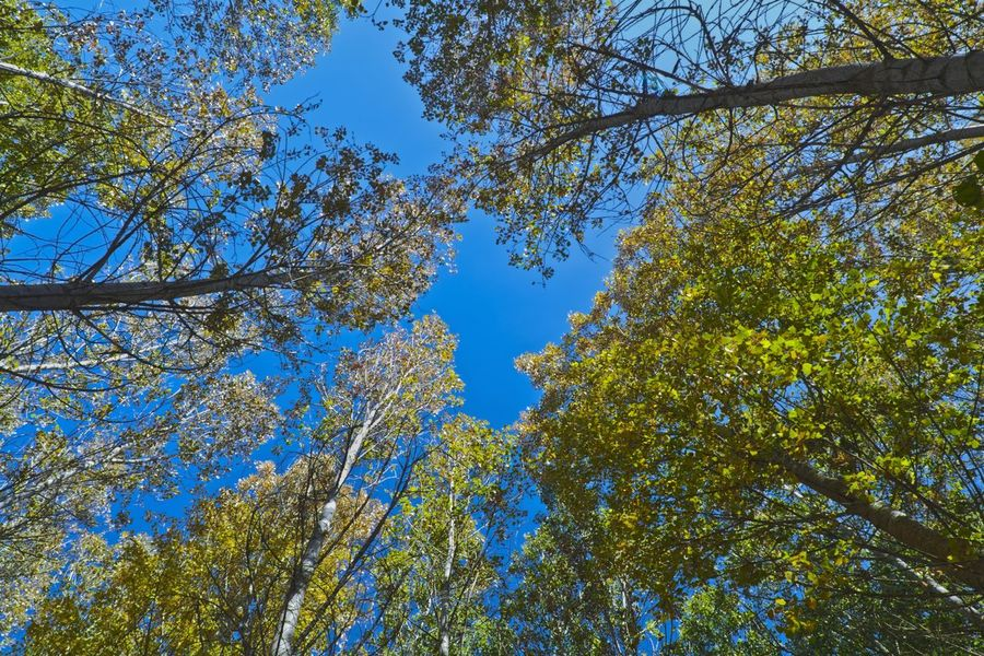 trees Nature Sky Top Blue Green Nature Summer Spring Tree Branch Flower Blue Forest Sky Treetop Tree Canopy  Upward View Directly Below Leaves Leaf Vein Skylight Plant Life
