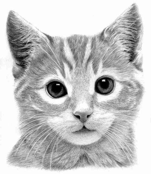 We miss you Lola. ??? Kitty My Draw ♥