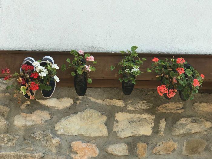 Safranbolu Safranboluevleri Safranbolu😊✌💕 Flower çiçek Ayakkabı Shoes Good Times Nice Day EyeEm LOST IN London EyeEm LOST IN London