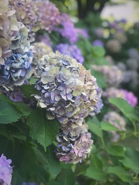 Flower Plant Growth Beauty In Nature Purple Flower Flowering Plant Fragility Close-up No People Nature Freshness Flower Head The Still Life Photographer - 2018 EyeEm Awards