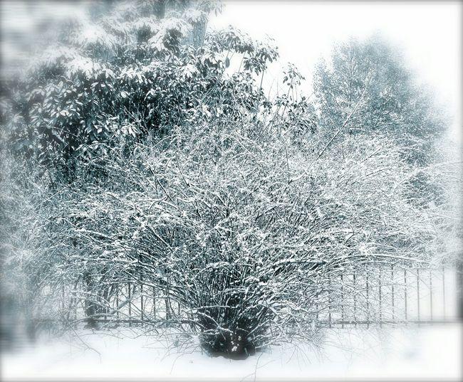 Winter Past