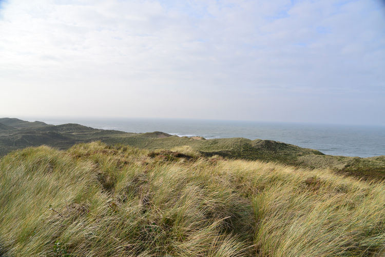 EyeEmNewHere Beach Beauty In Nature Cloud - Sky Day Grass Growth Horizon Horizon Over Water Land Marram Grass Nature No People Non-urban Scene Outdoors Plant Scenics - Nature Sea Sky Timothy Grass Tranquil Scene Tranquility Water