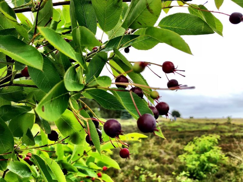 First Eyeem Photo Plant Fruit Growth Healthy Eating Tree Leaf Plant Part Nature Food And Drink Food Green Color Day Freshness Berry Fruit No People Beauty In Nature Wellbeing Branch Outdoors Hanging