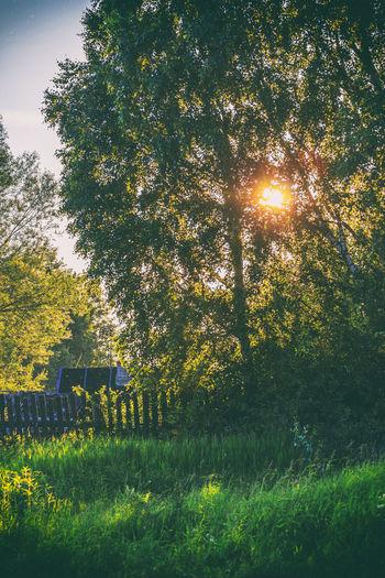 Sunset in the village. Beauty In Nature Day Grass Nature Nature No People Outdoors Rural Scene Sun Sunbeam Sunlight Sunset Tree Village
