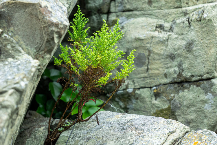 High angle view of plant growing on rock