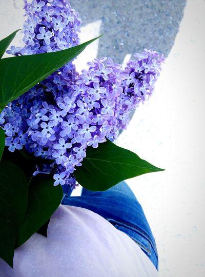 цветы сирень май Весение цветы