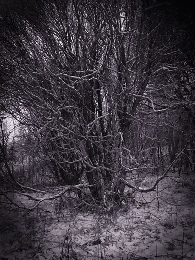 Stay safe Slow Pace Solitude And Silence Blackandwhite Tree Plant Winter Snow Branch Full Frame
