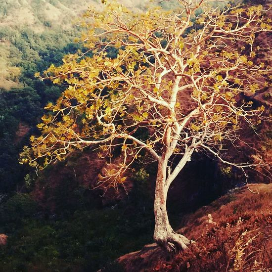 Standing on Down Hill No People Scenicsunset Nature Trees Sky Hill First Eyeem Photo
