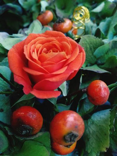 Flower Head Flower Leaf Rose - Flower Close-up Plant