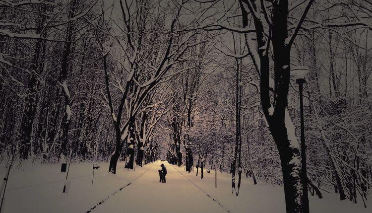 Winter Landscape Wintertime Trees Hugging A Tree Vanishing Point EyeEm Best Shots EyeEm Nature Lover Snow Silhouette