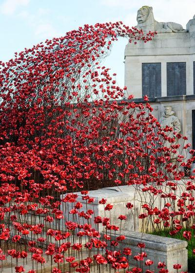 Red Building Exterior Built StructurePoppy Memorial War Memorial Architecture PoppyOutdoors No People Day Sky