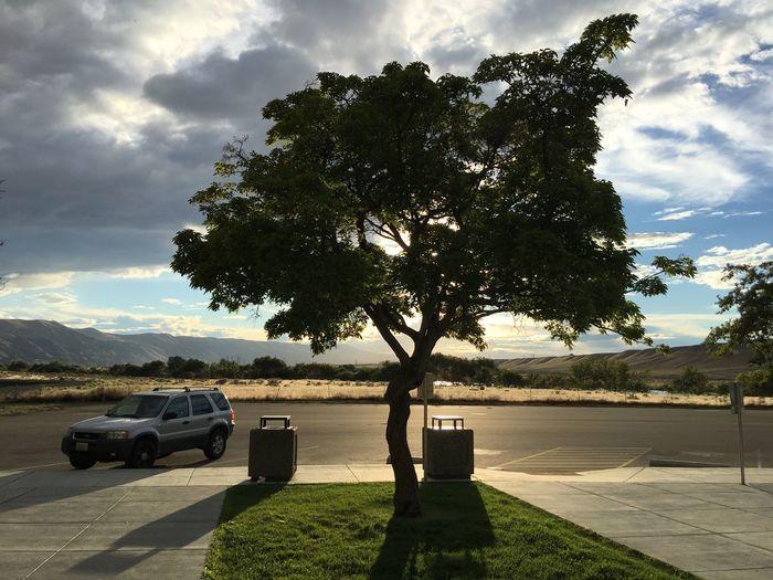 Tree on sidewalk by road against sky