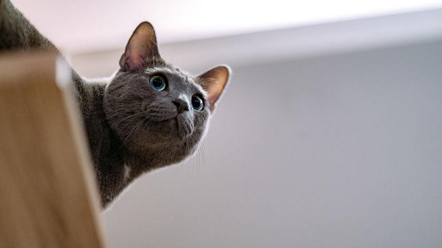 Lovely Cat Cat