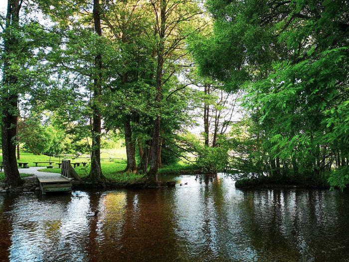 Ginučiai river