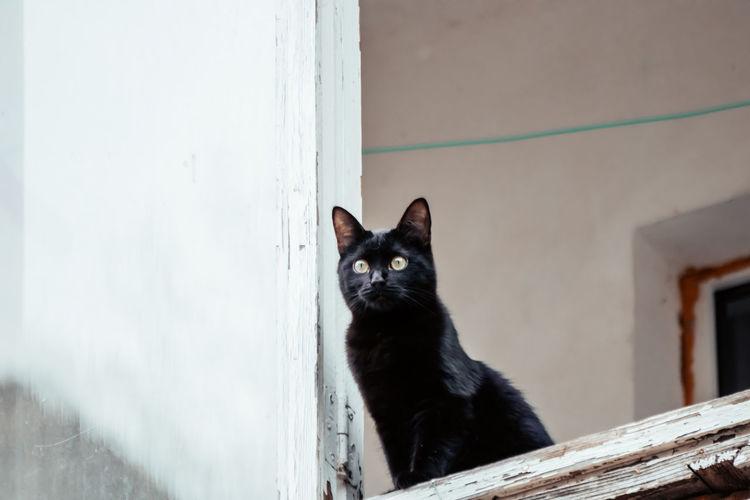 Portrait of black cat peeking from wall