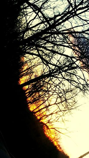 Another one of my favorites. Nature Sunset Tree Beauty In Nature Outdoors Low Angle View Tranquility Sky Scenics