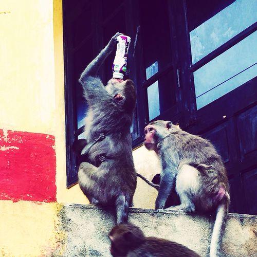 Monkey Vietnam EyeEmNewHere Monkeyisland