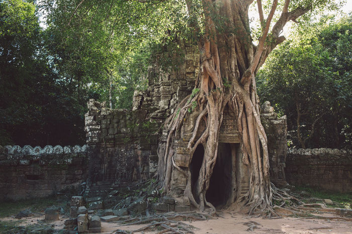 Siem Reap Cambodia Angkor Tree Plant Architecture Nature Growth Built Structure Trunk Tree Trunk Day No People History The Past Building Land Ancient Forest Building Exterior Old Outdoors Root Ruined Ancient Civilization
