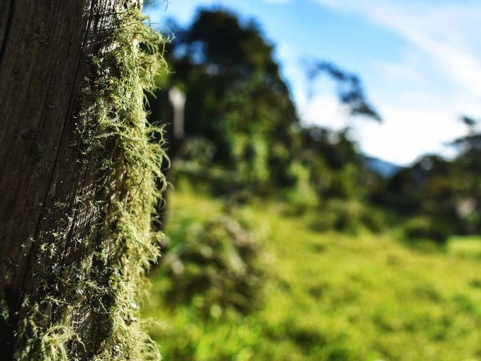 Nature Growth Green Color Focus On Foreground No People Outdoors Tree Day Beauty In Nature Grass Sky Plant Close-up Freshness