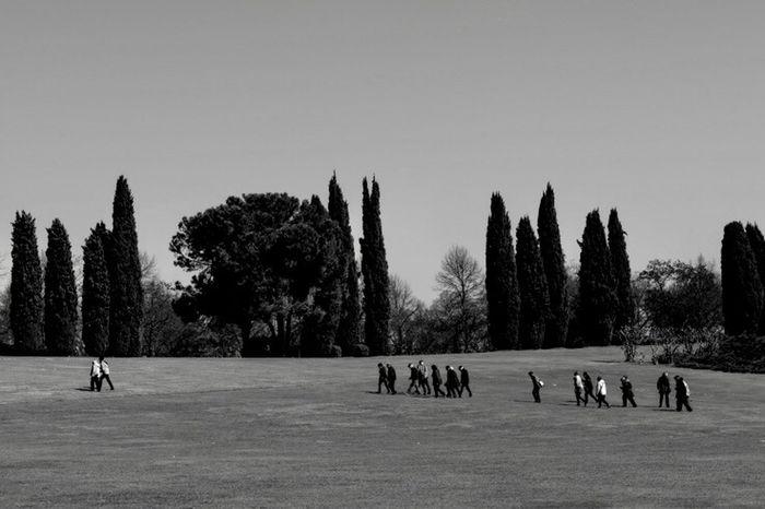 Tree Sport Large Group Of People Men Real People Teamwork Togetherness