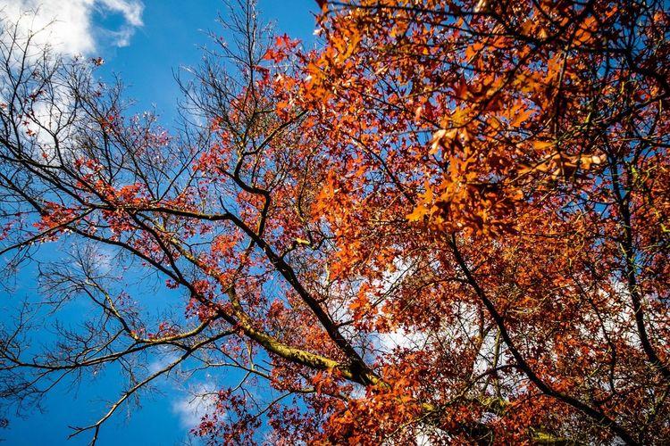 Autumn Indian