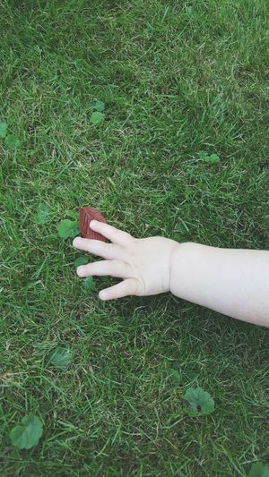 Leaf Cropped Baby Arm Baby Hand Toddler  Grabbing Leaf Reaching For Green Grass Outdoors Experience Nature Playing Summer Garden EyeEm Best Shots Light And Shadow One With Nature Beauty In Ordinary Things Peaceful Moment A Bird's Eye View Color Palette Lying On The Grass Holding A Leaf Crawling Babyboy
